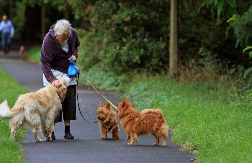femme âgée qui tient trois chiens en laisse